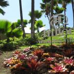 My holiday in Hawaii!|Mis vacaciones en Hawaii!